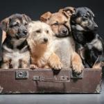 Welpen - Junghunde