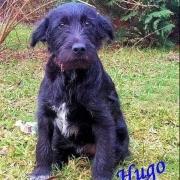 HUGO (m)